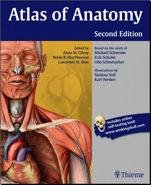 Atlas of Anatomy - 2E [Gilroy] [PDF] | Free Medical Books ...