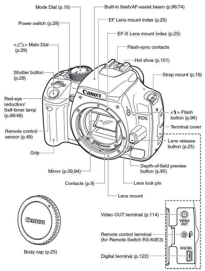 Canon digram Canon eos Camera equipment Eos, eos r support