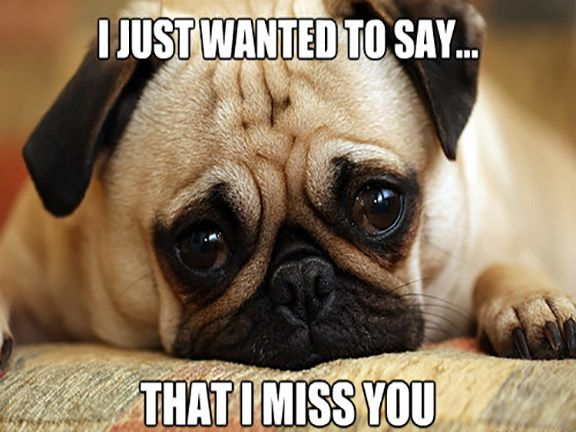 Top 30 Funny Pug Pictures With Captions Miss You Funny I Miss