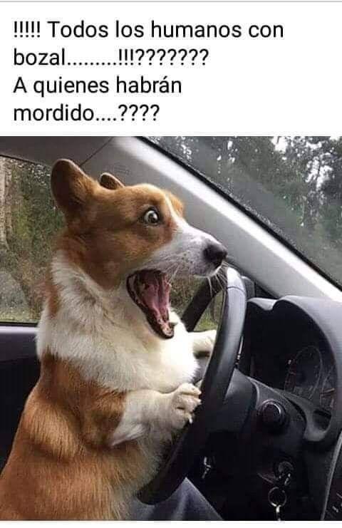 Mjh Ellos Son Libres Memes De Perros Graciosos Fotos De Perros Graciosas Humor Divertido Sobre Animales