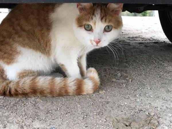 Lost Cat Prior Lake Minnesota Mn United States L33711 Cats Find Pets Pet Dogs