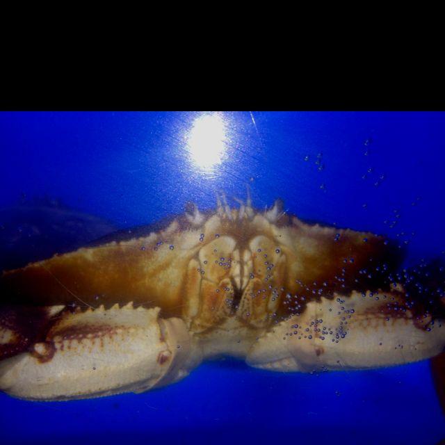 Dungeness crab at city crab!!