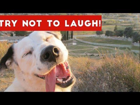 Youtube Funny Animal Fails Funny Animal Clips Funny Dog Videos