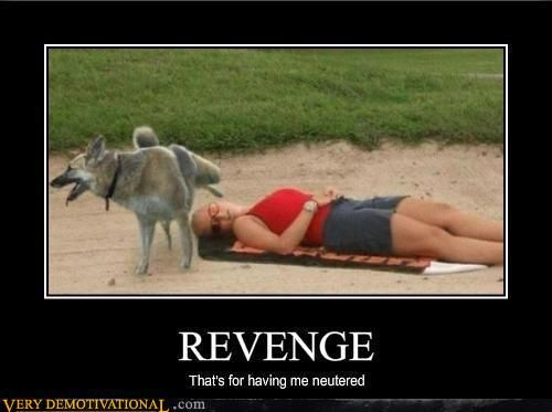Revenge That S For Having Me Neutered Funny Gif Funny Images Try Not To Laugh