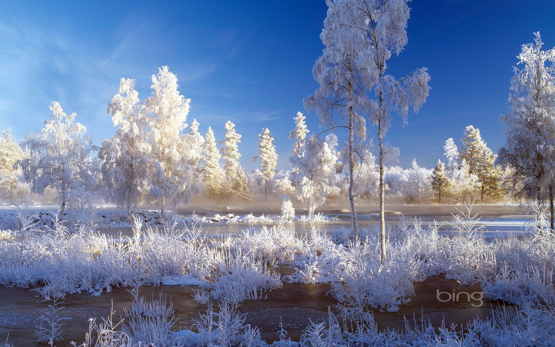 Weekly Bing wallpapers (25 to 31 December 2012) Winter