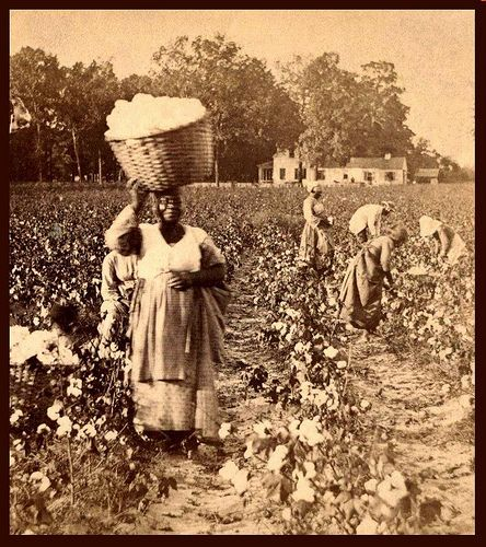IN A COTTON FIELD OF SOUTH CAROLINA:  SLAVES, EX-SLAVES, and CHILDREN OF SLAVES IN THE AMERICAN SOUTH, 1860 -1900 (10) by Okinawa Soba