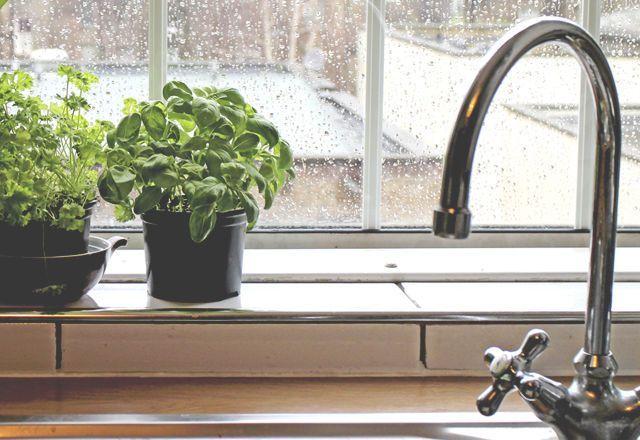蚊が嫌いな 8つの植物 意外と知られてないかも 虫除け 植物 浴室 植物 蚊