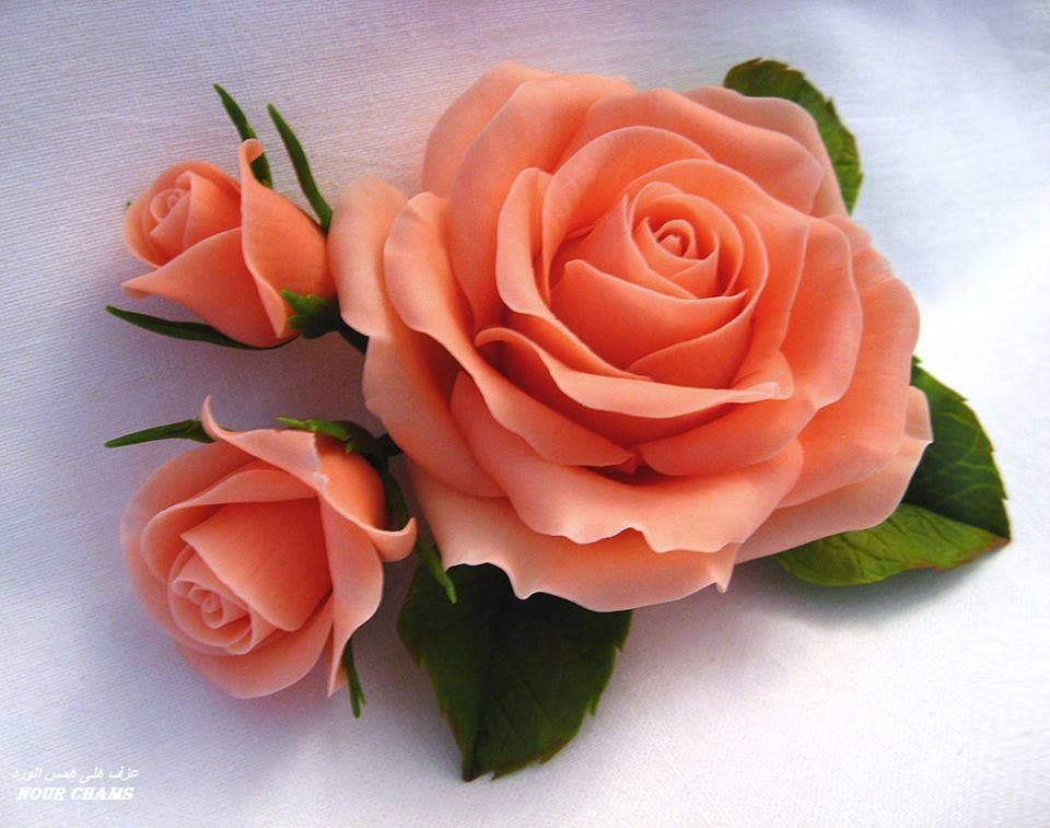 Lovely peach colored rose roses peach colored - Peach rose wallpaper ...