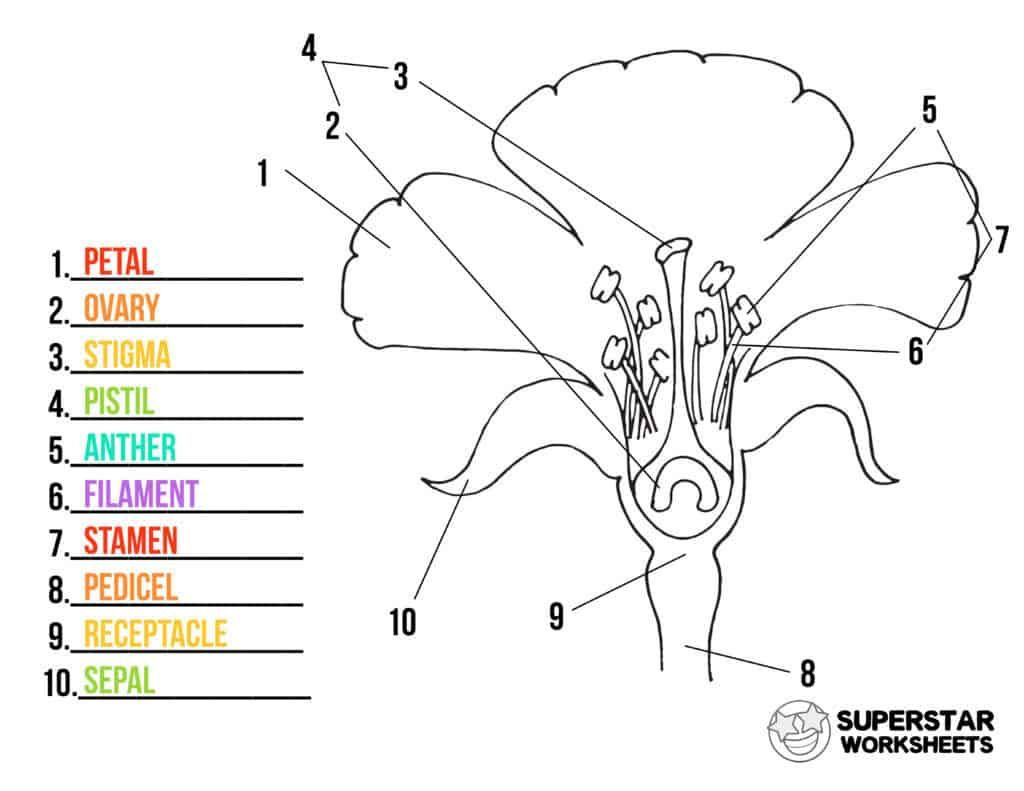 Parts Of A Flower Worksheets En