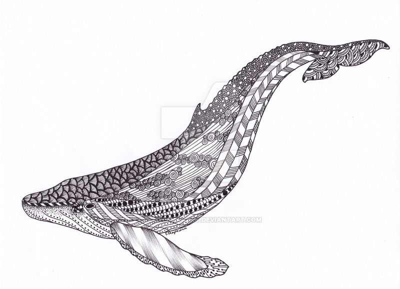 Zentangle Whale Google Search Animal Kingdom Colouring Book