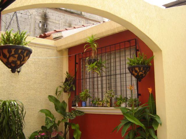 Patio peque o pergola enredadera helechos colgante - Pergolas para jardines pequenos ...