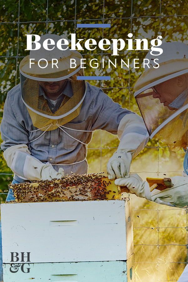 Everything Beginners Need to Know About Beekeeping | Bee ...