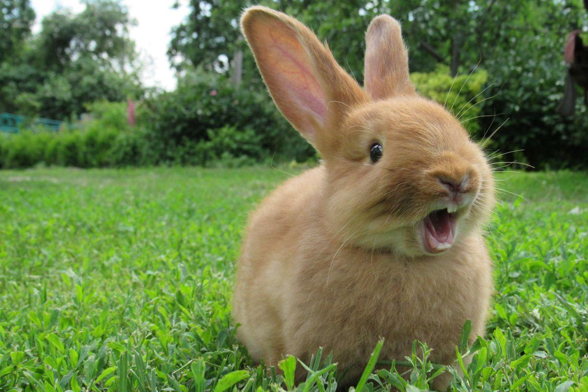Das Will Dir Dein Kaninchen Mir Seiner Korpersprache Sagen In 2020 Kaninchen Kaninchen Verhalten Hasen Fotos