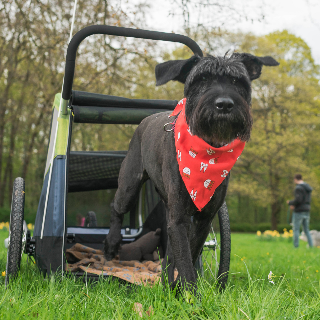 Croozer X Large Dog Bike Trailer for Dogs up to 45kg
