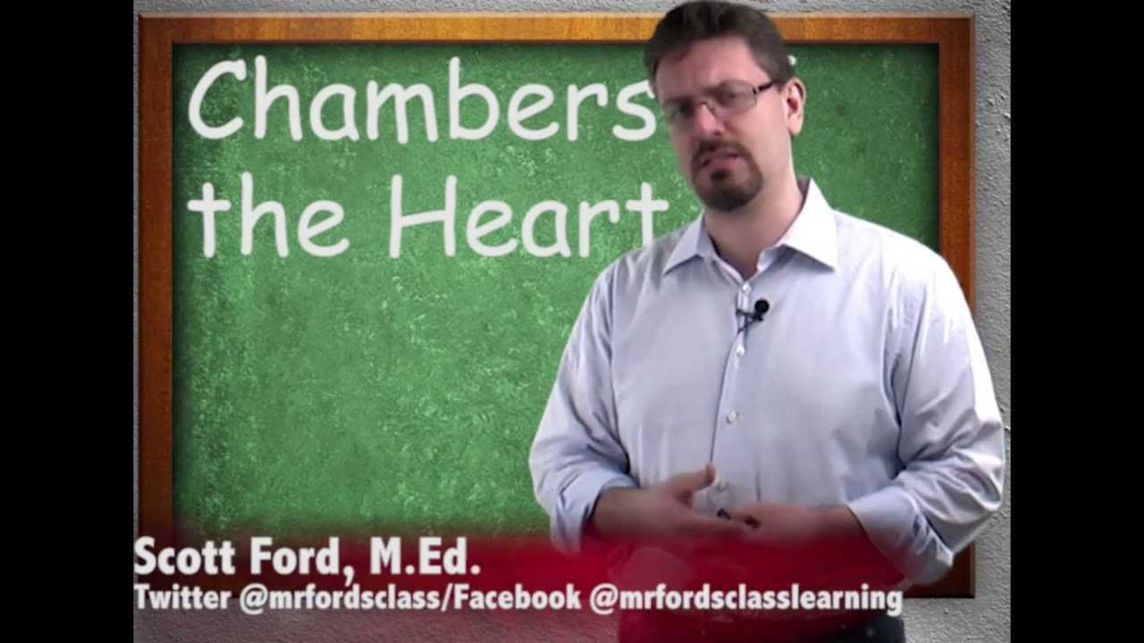Mr. Ford\'s Anatomy & Physiology: Chambers in the Heart (video 3 of ...