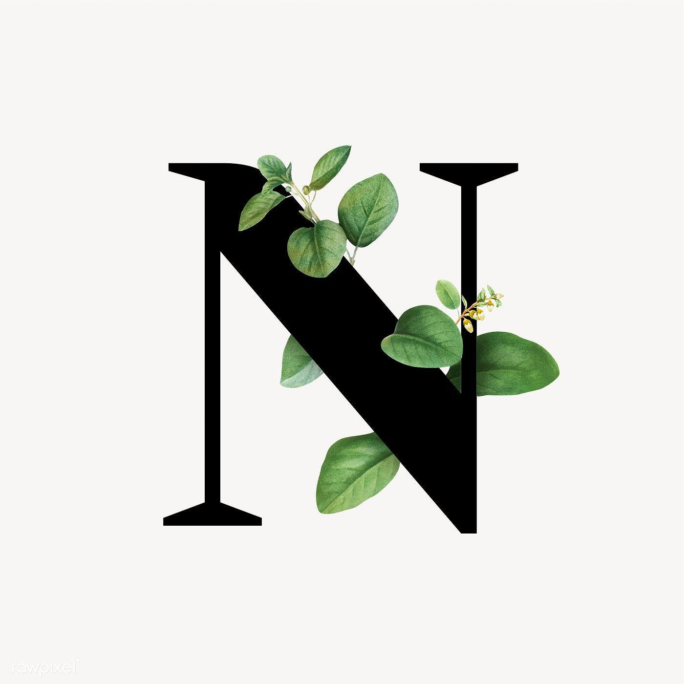 Botanical Capital Letter N Vector Premium Image By Rawpixel Com Aum Donlaya Kappy Kappy Manotang Letter N Lettering Alphabet Lettering Alphabet Fonts