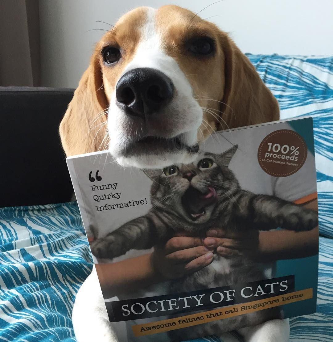 It's so hard to resist from beagling this lovely book of cats, especially when the cover looks almost like my sis!!