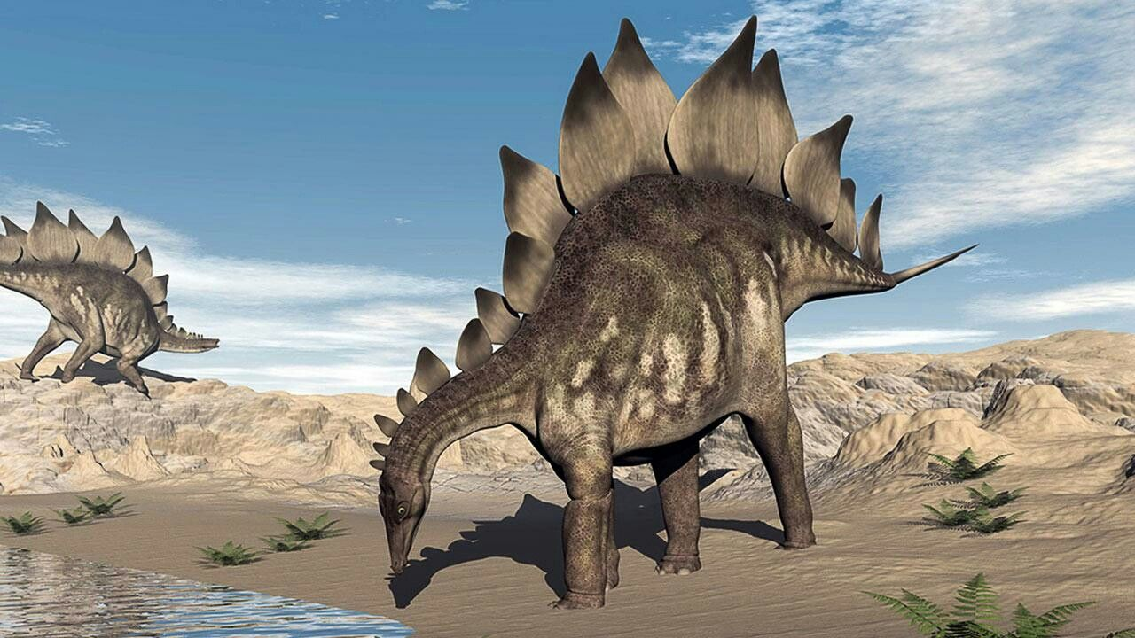 Стегозавр картинки фото