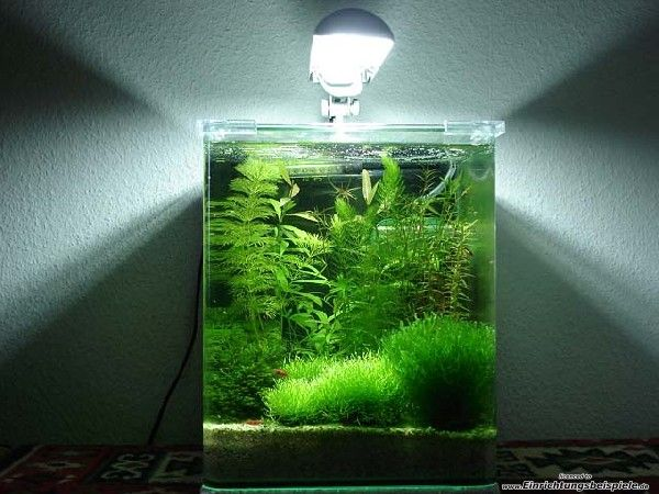 Schoner Pflegefreier Nano Cube Nano Aquarium Aquarium