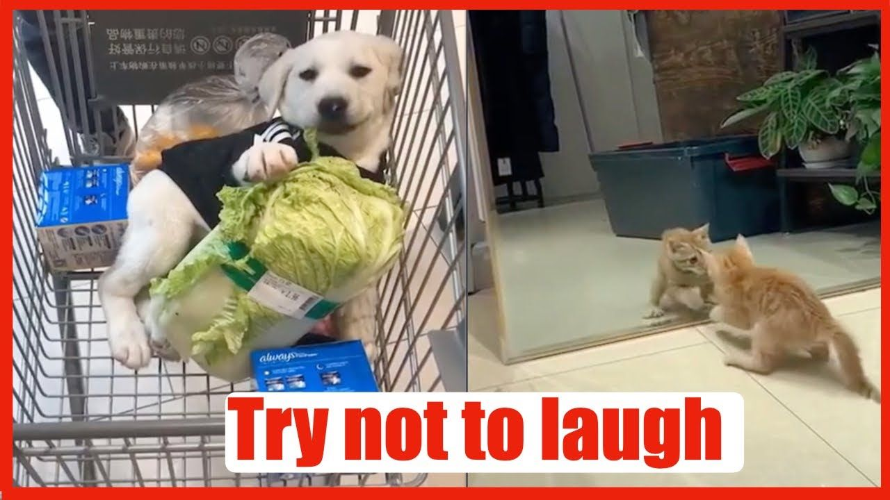 Funny Pets Try Not To Laugh افضل فيديو مضحك عن الحيوانات Funny Animals Try Not To Laugh Pets