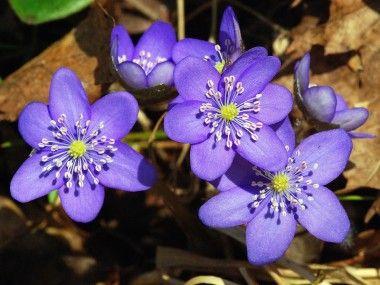 blomster bilder - Google-søk