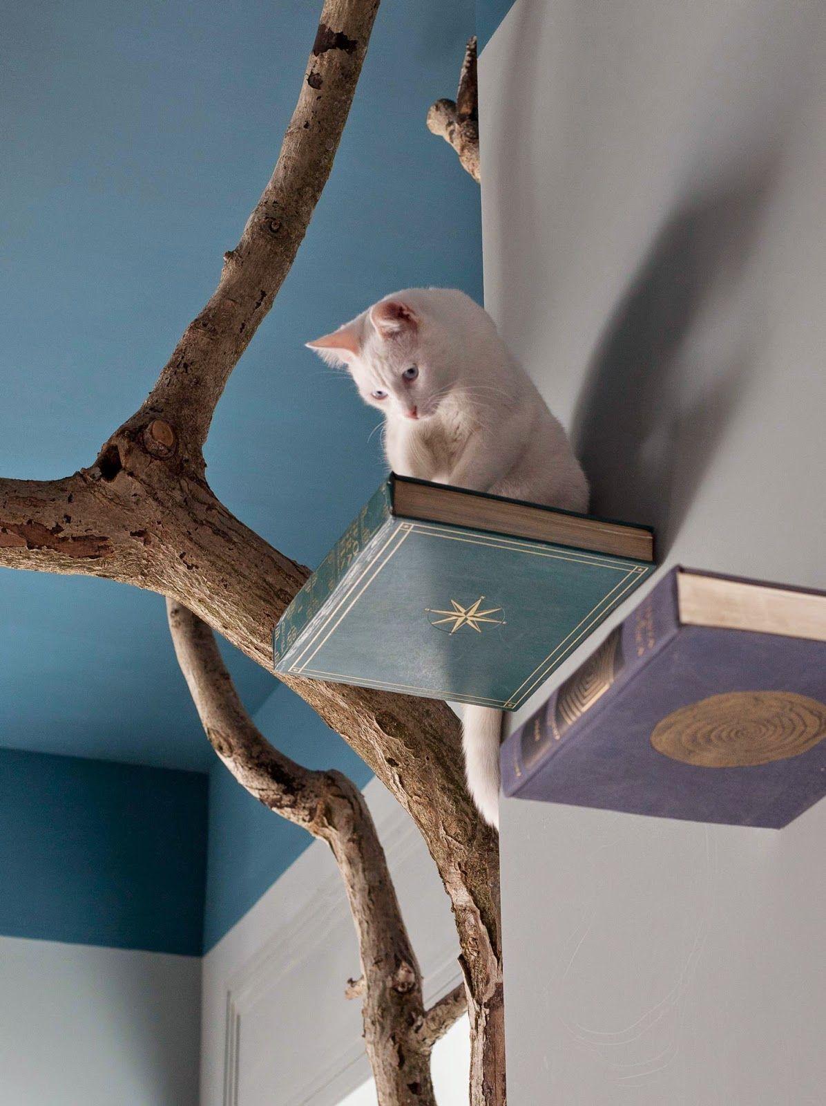 Costruire Lettiera Per Gatti ecco il romeow cat bistrot | stanza per gatto, gatti pazzi