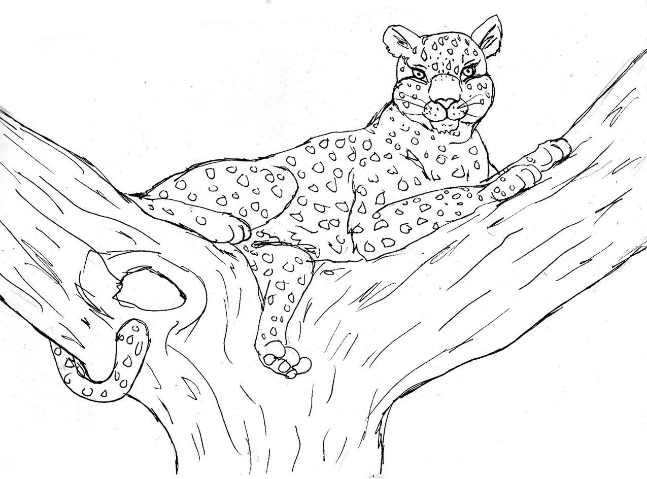 cheetah coloring page - Google Search | coloring pages | Pinterest ...
