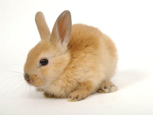 Karuta おしゃれまとめの人気アイデア Pinterest Yuki K 子ウサギ 動物 ウサギ