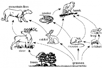 Food Webs Energy Flow Carbon Cycle And Trophic Pyramids Serendip Studio Food Web Carbon Cycle Food Web Activities