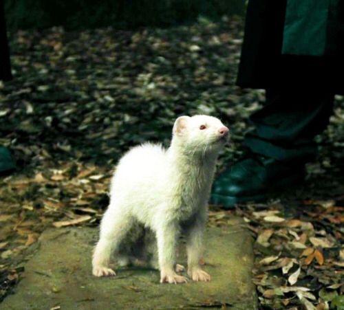 Wonderful Draco Malfoy · Harry PotterBadgesName BadgesButton ...
