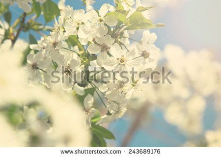Nature Stock Photos : Shutterstock Stock Photography