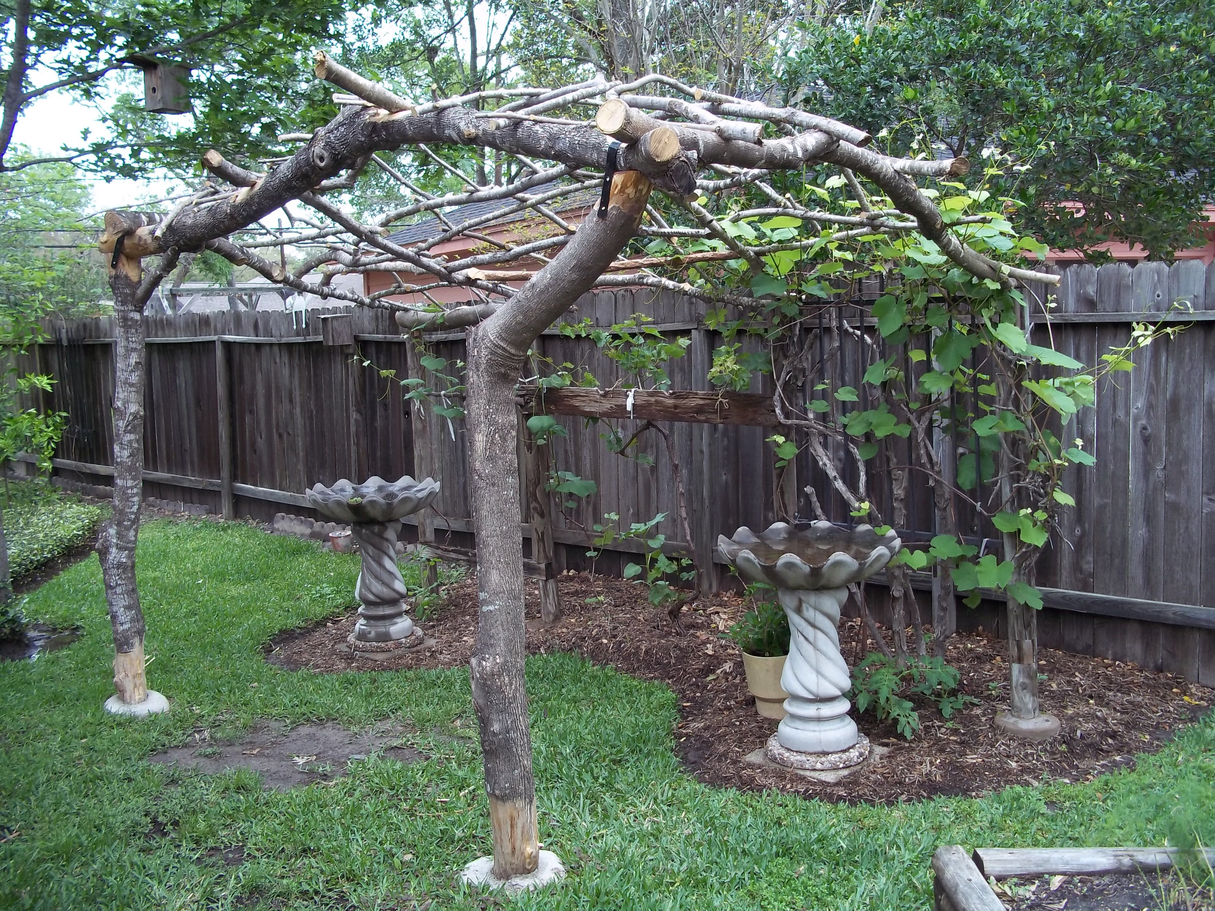 Grape Vine Arbor Made With Reclaimed Limbs From The Front Yard