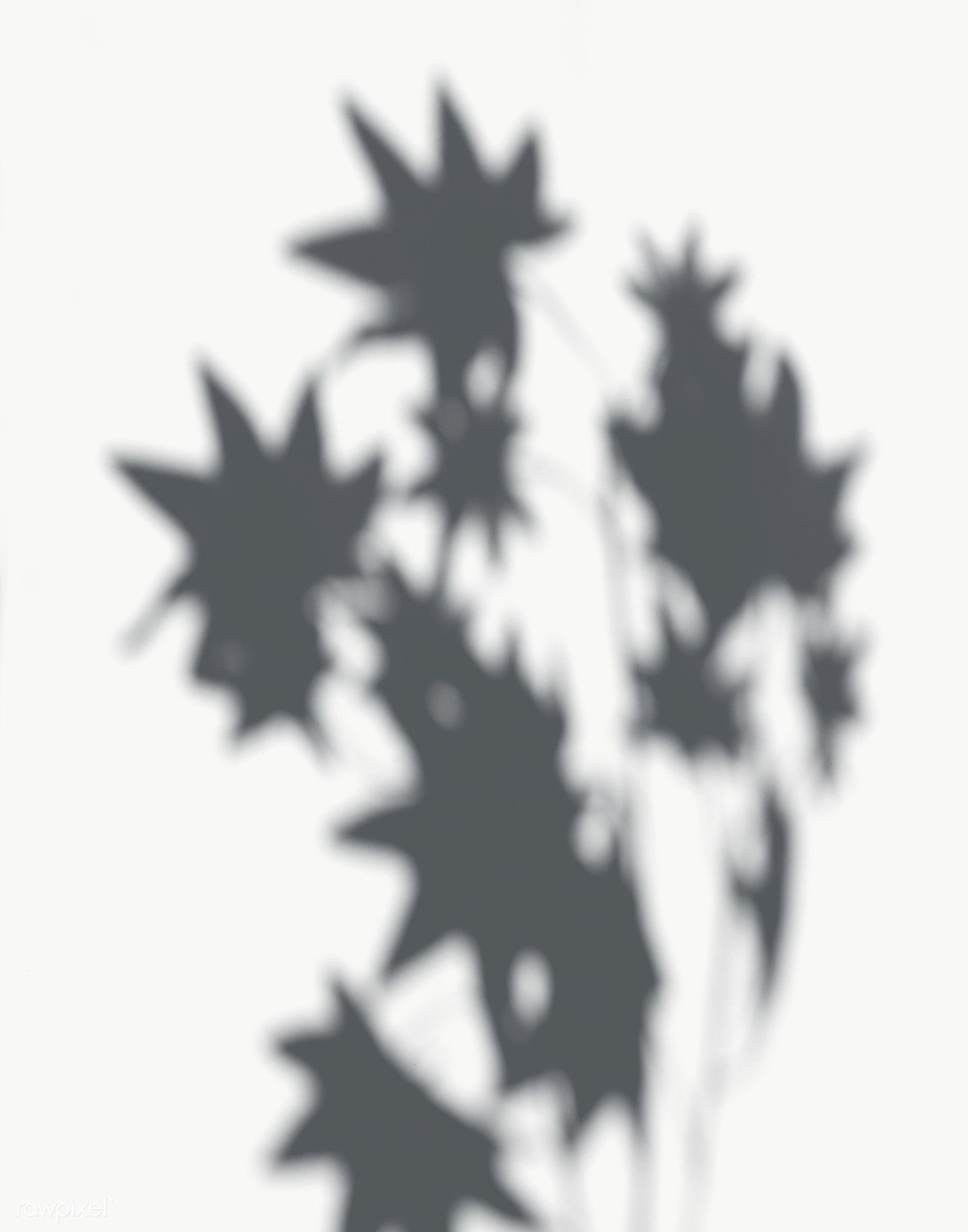 Shadow Of Maple Leaves On A White Wall Free Image By Rawpixel Com White Walls Shadow Shadow Plants