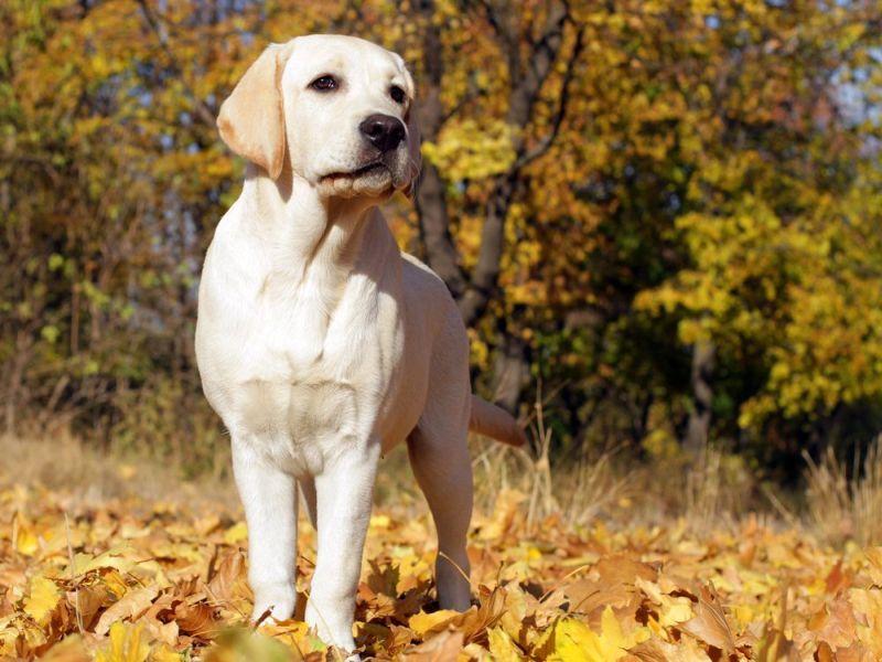 Scheintrachtigkeit Beim Hund Erkennen Tipps Hunde Gesunde