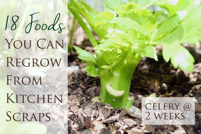 Growing Beets From Kitchen Scraps Growing Beets Growing Veggies Growing Vegetables
