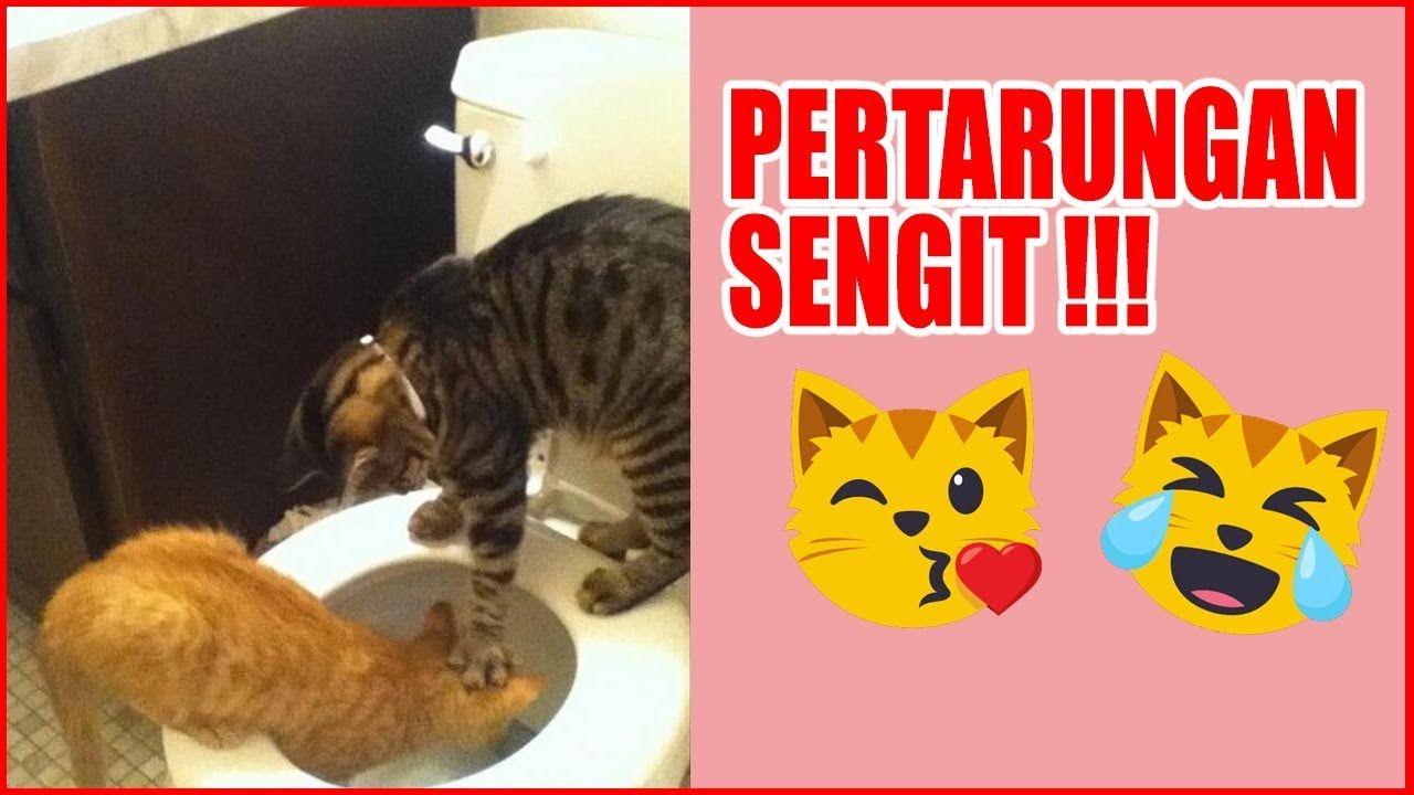 Kucing Captain Marvel Ashera Oren Dan Kucing Prabowo Versus Kumpulan Video Kucing Lucu 10 Menit Kucing Lucu Lucu Kucing Kuci Kucing Lucu Lucu Marvel