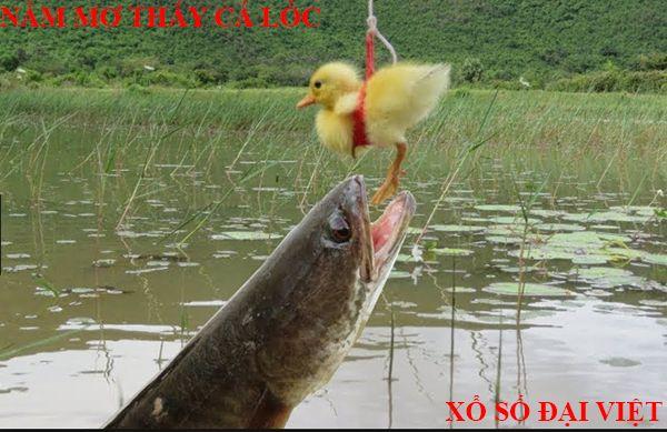nằm mơ thấy cá lóc đánh con gì