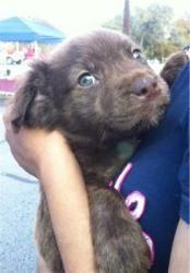 Adopt Koko On