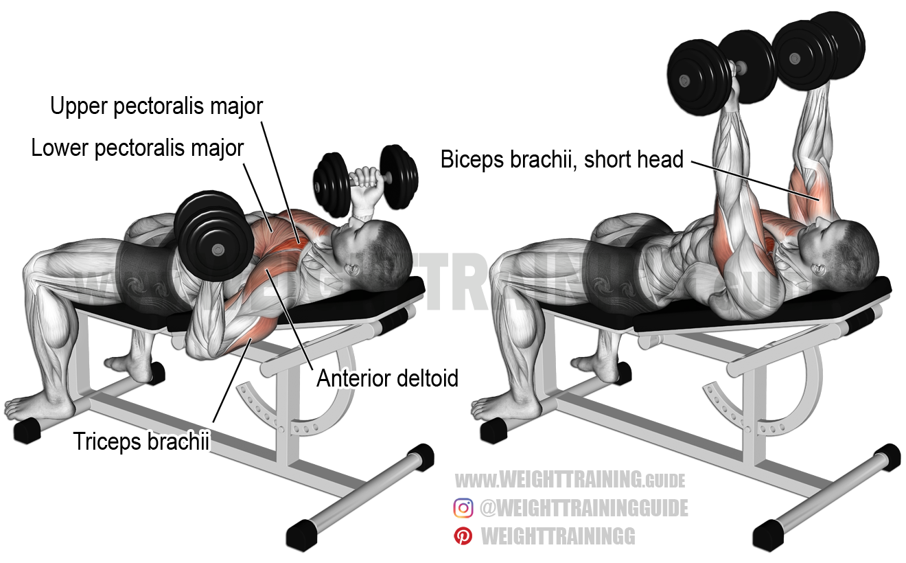 Incline reverse-grip dumbbell bench press exercise instructions and ...