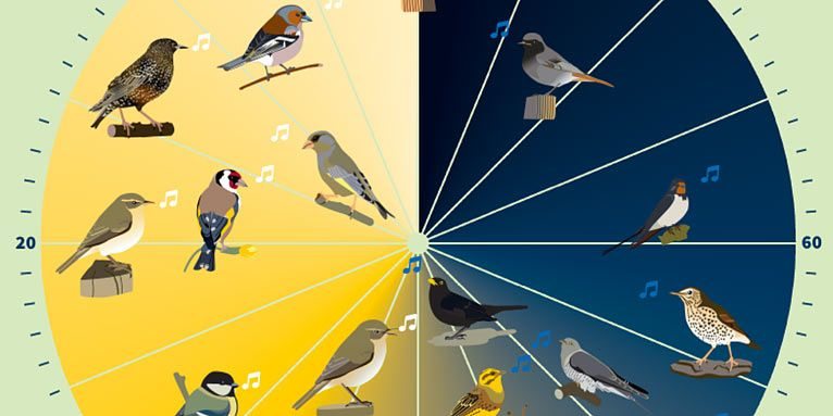 Welcher Vogel Singt Wann Nabu Vogeluhr Vogel Im Garten Vogeluhr Vogelkunde