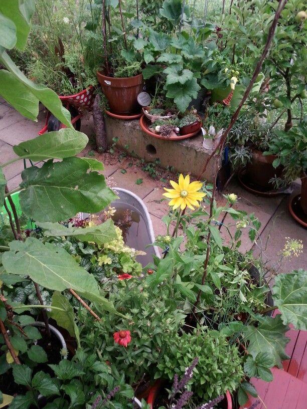 Gartenglück!!
