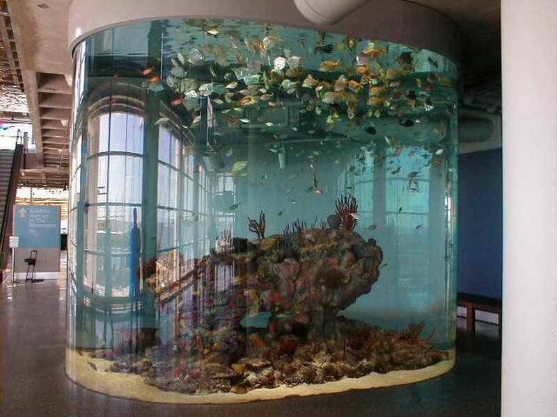Cool fish aquarium ideas aquarium fish pinterest for Cool fish for fish tanks