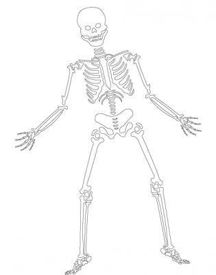 Blank Skeleton Diagram - Bing Images | Diagram