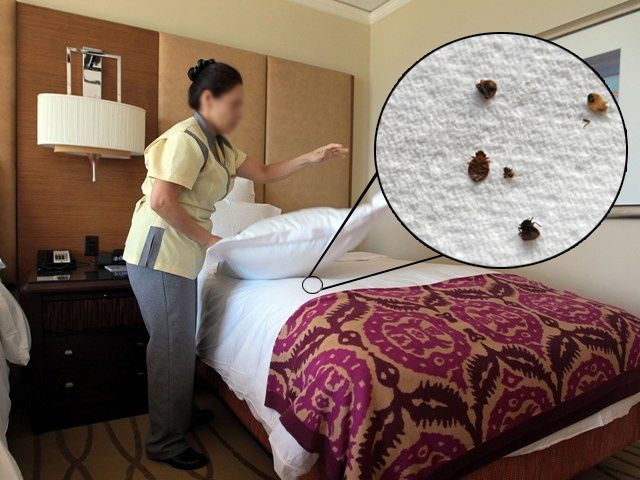How to avoid bed bugs when traveling deep south pinterest good housekeeping may not eliminate bed bugs problemhire expert professional to get rid of bed bugs call bayswater pest control to avoid this type of ccuart Gallery