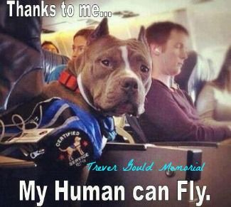 Watch Dave Wilson Perspective About American Bully Pitbulls