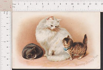Illustrated by Dorothy Travers Pope.