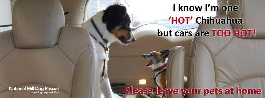 Please don't leave us in hot cars!  Read our blog post with more information and a flyer that can be downloaded and printed: http://nationalmilldogrescue.blogspot.com/2012/06/please-dont-leave-us-in-hot-cars.html
