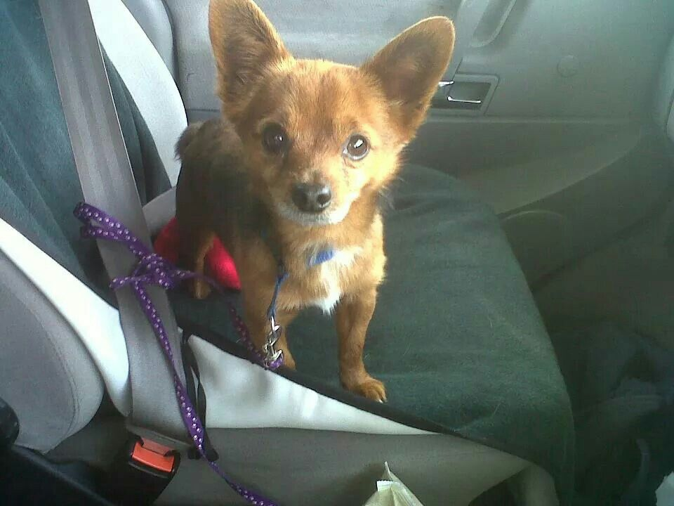 Pet Transport From New Zealand To The Uk Pet Transport Pet Taxi Dog Transport