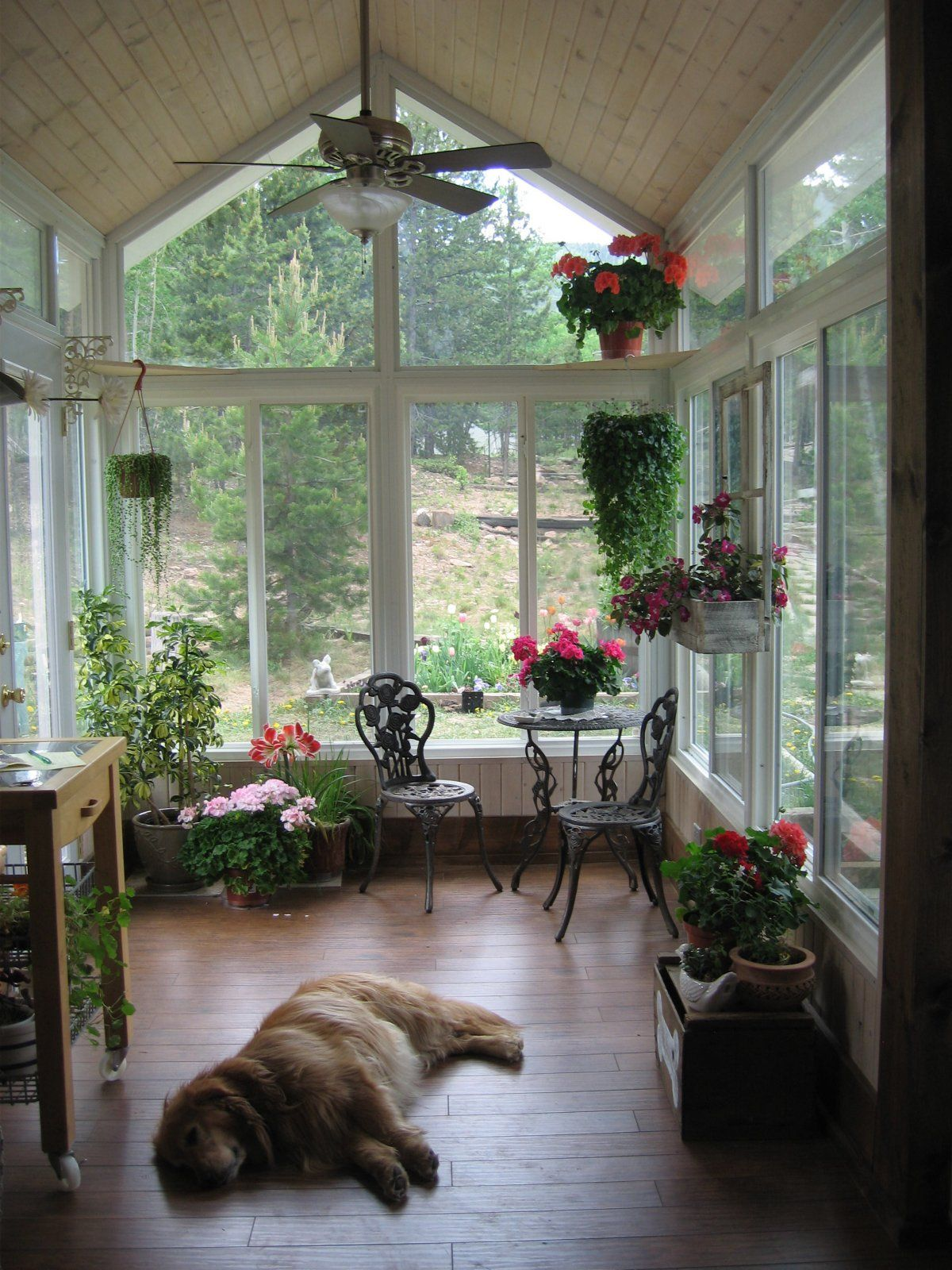 Small Sunroom Design Green Plant Interior Decor and Parquet ...
