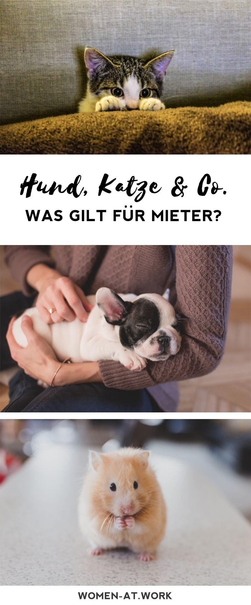 Haustiere Im Mietshaus Was Gilt Fur Mieter Mit Hund Katze Co
